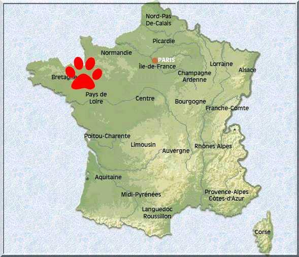 Chiot Beauceron Lof Elevage De Beaucerons Lof Familial